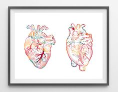 The Human Heart watercolor print anatomical Heart by MimiPrints