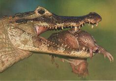 صور حيوانات بريه رائعه 2012 , احدث صور للحيوانات البرية 2013 , Wild animals…