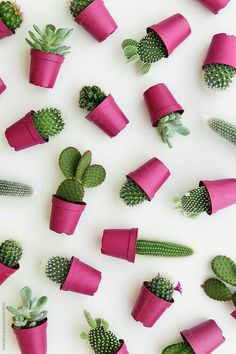 Cactus background by Ruth Black for Stocksy United Cactus background by Ruth Black for Stocksy United Flower backgrounds Flower Background Wallpaper, Flower Phone Wallpaper, Cute Wallpaper Backgrounds, Tumblr Wallpaper, Aesthetic Iphone Wallpaper, Colorful Wallpaper, Cute Wallpapers, Wallpaper Quotes, Ipad Background