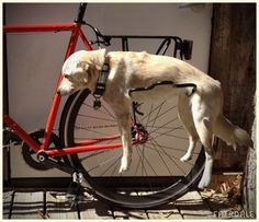 Dog Rack - Fairdale (because tying your dog's leash to your bike is cruel :-[ )