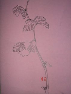 pencil sketch - young leaves
