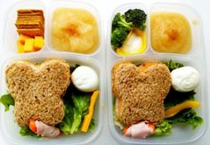 Butterfly Life Cycle Bento