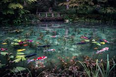 Too Beautiful Monet's Pond - Small pond located deep in the mountains of Gifu Prefecture, which has become a hot topic in Japan. Water quality of the pond is too beautiful. This pond is similar to Monet's pond of painting. Please look at the beautiful pic