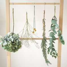 Mochi, Dried Flowers, Plant Hanger, Easy Diy, Herbs, Wreaths, Interior, Green, Plants