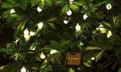 Luci da giardino a energia solare