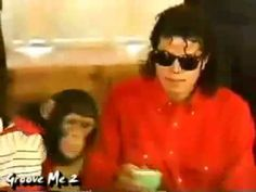 Michael Jackson's Pet Chimp, Bubbles, Lives Out His Twilight Years in Florida | Miami New Times