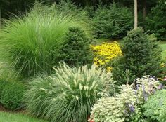 Garden And Lawn , Ornamental Grasses For Gardens Designs : Ornamental Grasses For Garden Designs With Evergreen