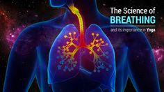 The Science of Breathing and its importance of Yoga - yoga breath V4 Graded