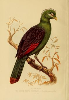 """https://flic.kr/p/e2Rqxn 