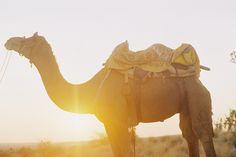RAYYIU RADZI PHOTOGRAPHY. cool camel.