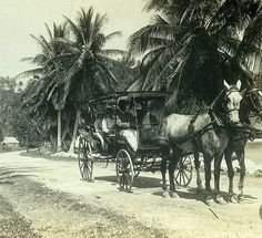 A Fine Country Road in Jamaica   by The Caribbean Photo Archive