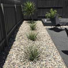 Remember our side yard? Back in December, we shared our DIY landscaping plan and initial work. Dessert Landscaping, Gravel Landscaping, Landscaping With Rocks, Landscaping Plants, Front Yard Landscaping, Black Rock Landscaping, Gravel Garden, Garden Paths, Landscaping Ideas