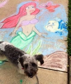 Puppy Oliver and The Little Mermaid chalk drawing we found on our neighborhood walk! Kingdom of Azuria Mermaid Princess, Princess Party, Chalk Drawings, Under The Sea, The Little Mermaid, The Neighbourhood, Puppies, Blog, Baby Dogs