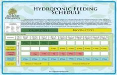 All You Need To Know About Hydroponics Garden Ideas