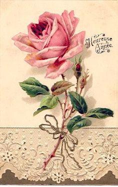 Vintage pink rose.   Beautiful
