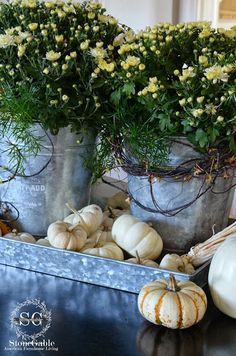 two galvanized buckets filled with white mums & asparagus fern