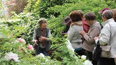 Travellers on one of the 37 trips conducted by APT Botanica Tours each year. Chelsea Flower Show, Tourism, Trips, Gardens, Couple Photos, Flowers, Travel, Turismo, Viajes