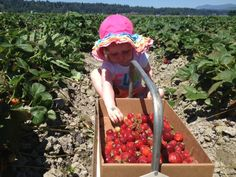 The berries have arrived early this year, and we know 5 fabulous farms where your lil' berry lovers can do the picking (and sampling!).