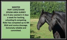 Unfortunately the website for Rehome My Horse has had to close My Horse, Horses, Wanted Ads, Dressage, Searching, This Is Us, Platform, Pop, Website