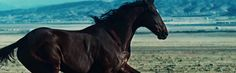 Rhianna's Diamonds vid features two gorgeous horses, here's one