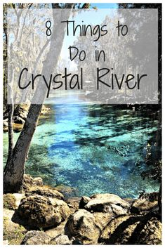 Crystal River is a quiet, yet adventurous town off Florida& Gulf of Mexico coast. I love the area so much that I went back again this year to check off some of the things I didn& do last year! Here are some of my recommendations! Places In Florida, Visit Florida, Florida Vacation, Florida Travel, Vacation Spots, Travel Usa, Florida Trips, Florida Living, Travel Tips