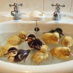 Image via We Heart It #animals #baby #ducks