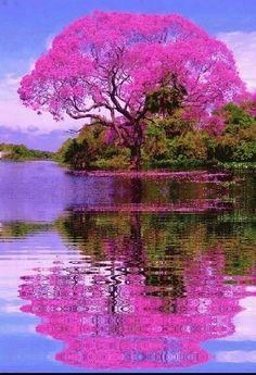 """Beautiful tree in Brazil🌳… "" Beautiful Nature Wallpaper, Beautiful Landscapes, Beautiful Scenery, Beautiful Nature Photography, Beautiful Paintings Of Nature, Beautiful Landscape Pictures, Beautiful World, Beautiful Images, Natur Wallpaper"
