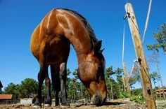 A psyllium/magnesium sulfate combination appears safe and effective for helping horses evacuate sand from their colons.