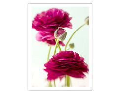 Red Flower  Photo Card Valentine Card Mother's Day by JudyStalus