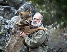 """""""Sin Félix Rodríguez de la Fuente, probablemente hoy no tendríamos lobos en España"""" Felix Rodriguez, My Love, Image, Fonts, Wolves, Animales, Earth, My Boo"""
