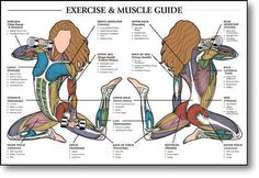 Muscle & Exercise Guide