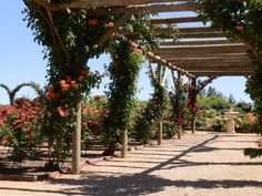 Botanical Gardens, Mildura, Victoria, Australia