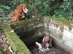 Dog stands guard for week until trapped friend found