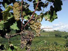 Il Vino Rabosello: un veneto romantico