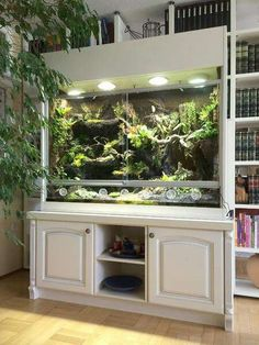 Wonderful cupboard terrarium