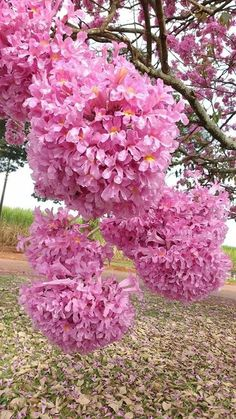 I don't know the name of these flowers but they are pretty Unusual Flowers, Rare Flowers, Flowers Nature, Amazing Flowers, Pink Flowers, Beautiful Flowers, Bloom, Pink Garden, Exotic Plants