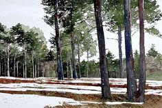 Esher woods, snow  copy