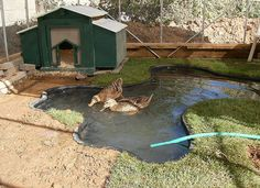 Like this duck enclosure idea... pond with grass/bank areas plus house. Definitely do-able!