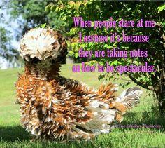 The Chicken Chick®: Flock Focus Friday, 8/30/13