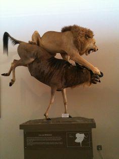 Las Vegas Natural History Museum paikassa Las Vegas, NV