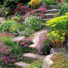 Un escalier de style au naturel fleuri entre autre d armeria, euphorbe intercalées entre les pierres.