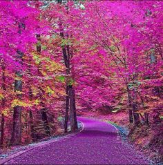 Adorable Nature Photography by Architecture & Design Pink Trees, Colorful Trees, Beautiful World, Beautiful Places, Beautiful Pictures, Beautiful Scenery, Amazing Pics, Beautiful Sky, Beautiful Artwork