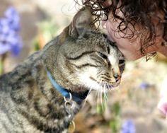 """""""Como nossa percepção sensorial é bastante distinta daquela dos nossos amigos felinos, delegamos como beijo do gato o comportamento de tocar o focinho nos nossos rostos"""""""