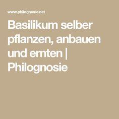 Basilikum selber pflanzen, anbauen und ernten | Philognosie
