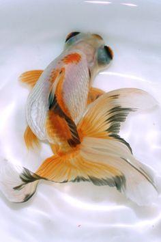 Pesca by *FishPanda on deviantART