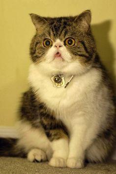 Funny cats - part 79 (35 pics + 10 gifs)