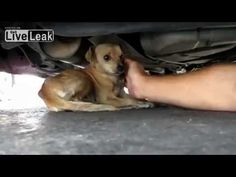 A must see dog rescue - Animal Rescue  Eldad Hagar - Hope for Paws