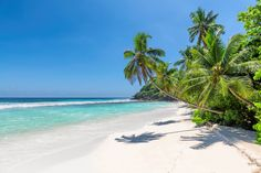 Paradise beach by Dmitry Vinogradov - Photo 291775949 / Sunny Beach, Paradise, Tropical, Vacation, Water, Summer, Outdoor, Gripe Water, Outdoors
