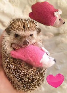 Mini Hedgehog Snuggle Buddies by HedgehogMart on Etsy