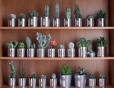 Decoração - Cactos e suculentas em latinhas em estante.